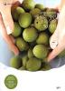 매실로 차린 초록식탁 50가지(로하스라이프6)